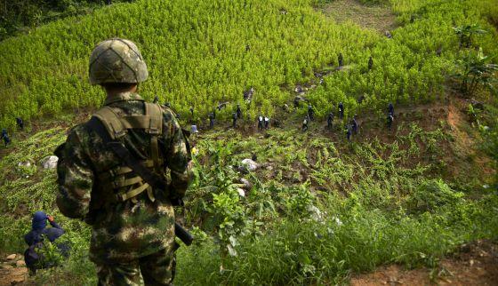 AUMENTA CULTIVO DE COCAINA EN COLOMBIA: Estados Unidos exige reducir producción